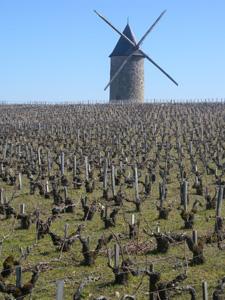 le moulin de la Tour Haut-Caussan et ses vignes