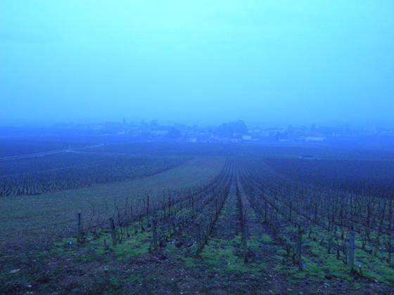 les vignes à Vosne-Romanée