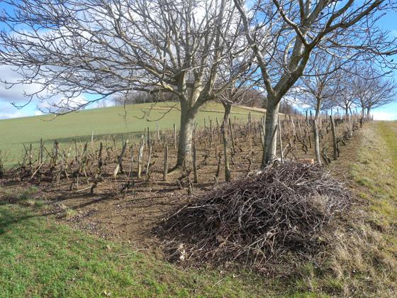 un jolie vigne en Auvergne